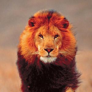 лев скачать торрент - фото 11