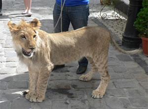 lviv-leon