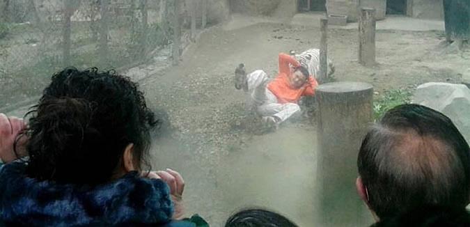 china-tiger