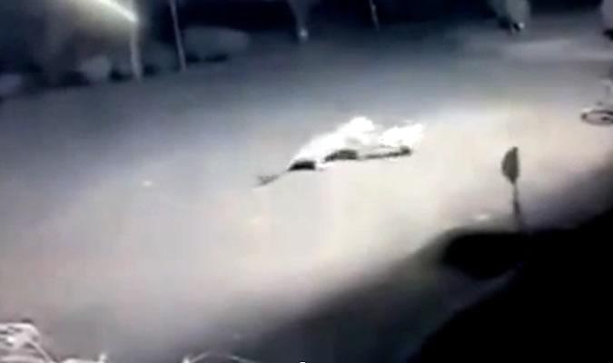 Леопард напал на спящую собаку