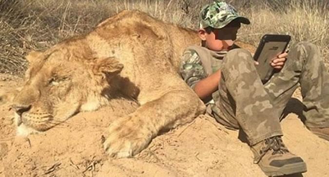 дети убили льва - фото из Twitter