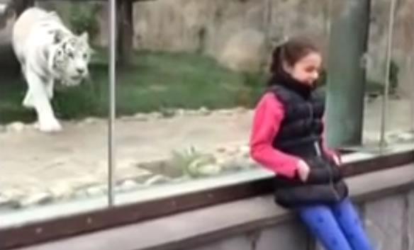 Тигр напал на девочку