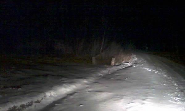 Амурские тигрята выходят на трассу в Приморье