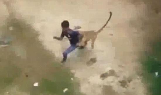 Леопард напал на деревню в Индии