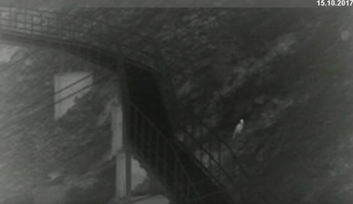 Камеры наблюдения засняли леопарда в горах Осетии