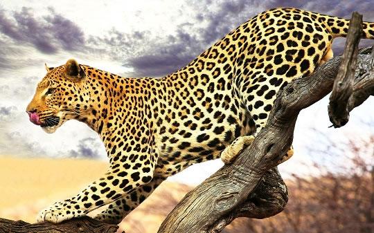 Леопард съел двух детей в Индии