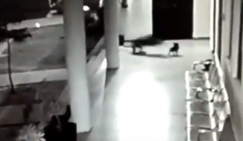 Собака спасла щенка от леопарда