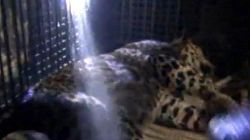 В Индии леопард ворвался в полицейский участок